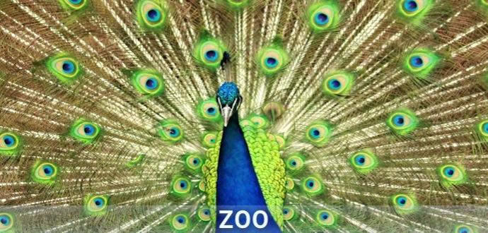 Playlist artwork ZOO